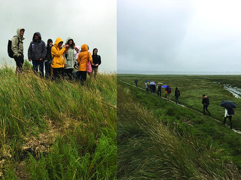 Paysage en mouvement : comment valoriser la remise en eau d'un polder ?